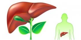 خار مریم بهترین دارو برای درمان بیماریهای كبد است