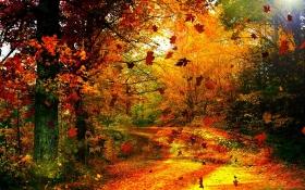 پوست را در برابر باد پاییزی محافظت کنید