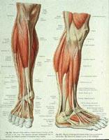 گرفتگی عضلات ساق پا