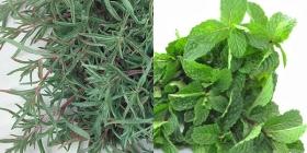 آژیرقرمز وزارت بهداشت برای سبزیجات آلوده!